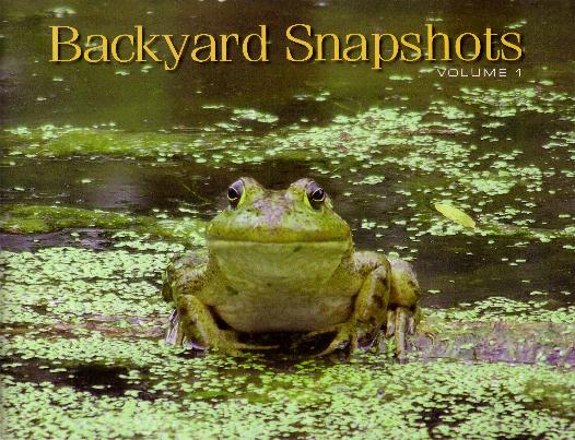 Backyard Snapshots by Adrienne Petterson